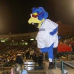 Trenton Thunder crowd
